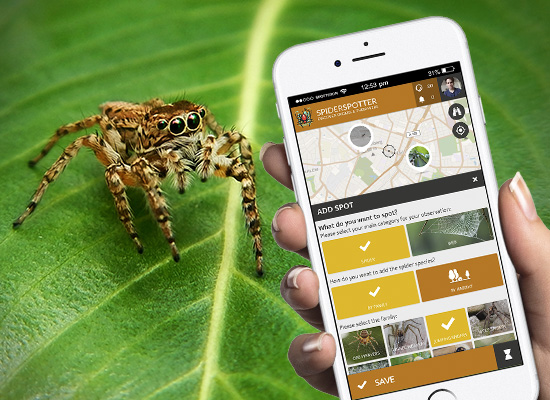 Spot spiders in the SPOTTERON Citizen Science app