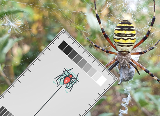 Download the Spider Spotter Card